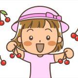 新潟のさくらんぼ狩り農園紹介