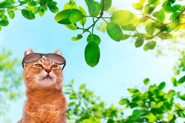 紫外線対策のサングラスと猫です
