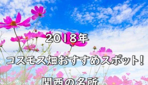2018年コスモス畑おすすめスポット!関西の名所をまとめてみた!
