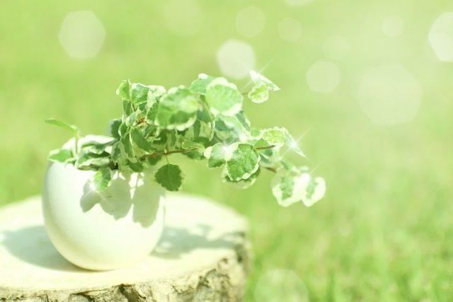 人間関係アップ術を紹介します。観葉植物