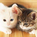 猫の熱中症予防グッズ5選!原因や対策も!